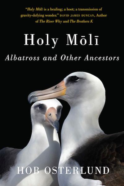 holy_molli